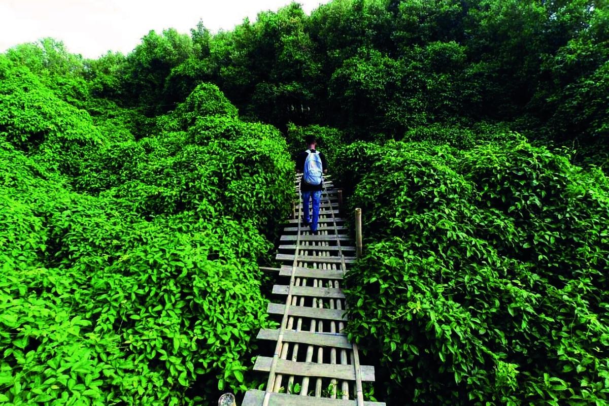 Hutan-Mangrove-Jogja