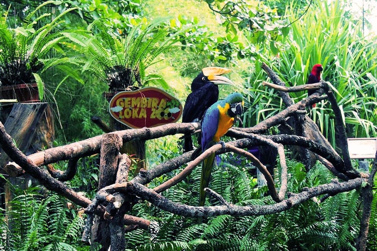 gembiraloka-zoo